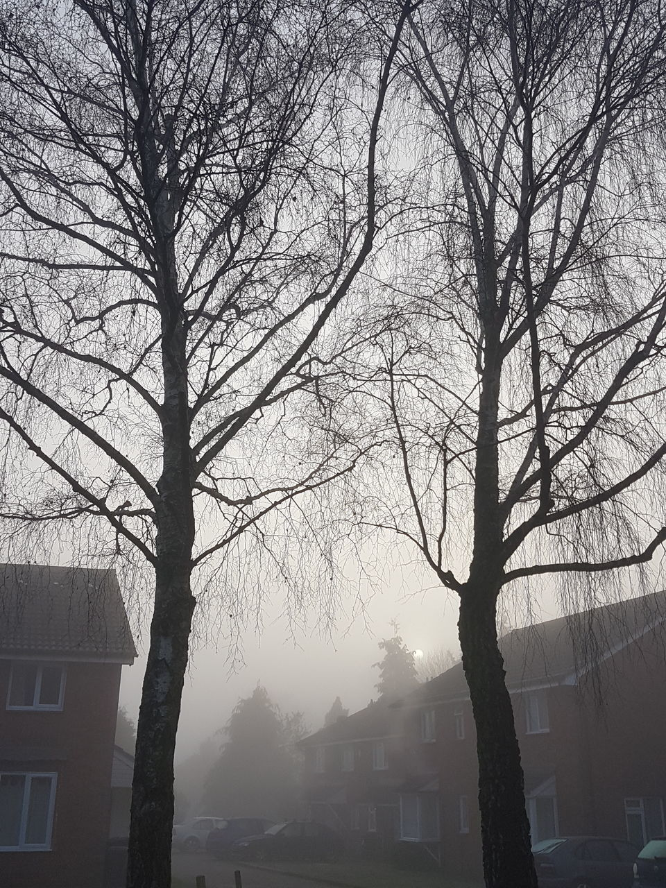 bare tree, building exterior, architecture, tree, built structure, branch, house, outdoors, no people, city, fog, residential building, nature, winter, day, beauty in nature, sky