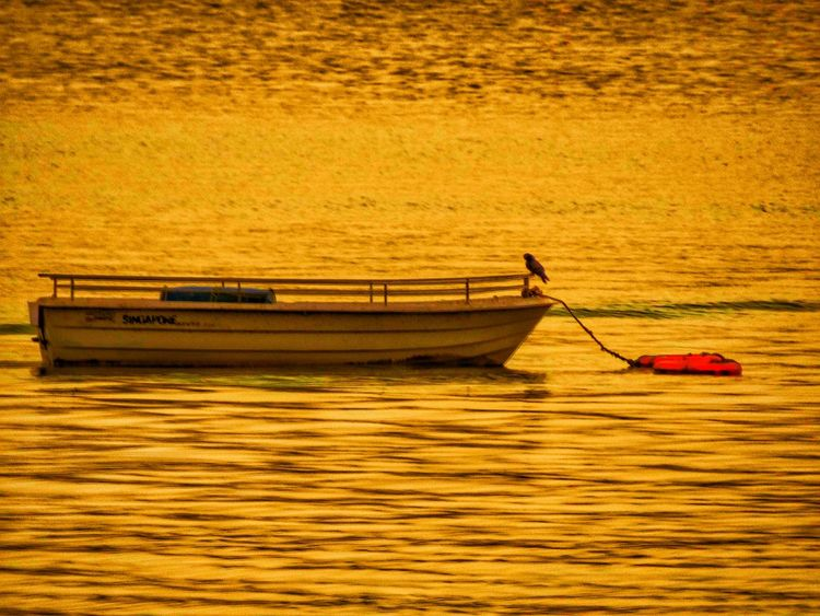 Traveller bird. Birds Birds Of EyeEm  Bird Photography Boats Boats And Water Lakeside Lakes  Udaipur Udaipurblog India Fatehsagar Fatehsagar_Lake Evening Summershots Summer Sony EyeEm Best Shots EyeEm Nature Lover Eyeemphotography EyeEmBestPics The Essence Of Summer