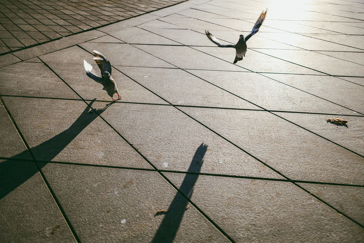 Birds Nikon Z7 Europe City Birds Pigeon Bird Vertebrate Animal Themes Animal Animals In The Wild Animal Wildlife Shadow Group Of Animals Two Animals Sunlight Day Flying Nature Footpath High Angle View No People Spread Wings Outdoors Paving Stone Tiled Floor