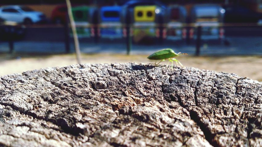 EyeEm Selects Mobile Photography Mobilephotography Sony Xperia Zr Close-up Day Nature Insect Insect Photography Insects  Macro Macro Photography Wood Texture Textures And Surfaces Colors Colorful Street Urban Nature Adapted To The City