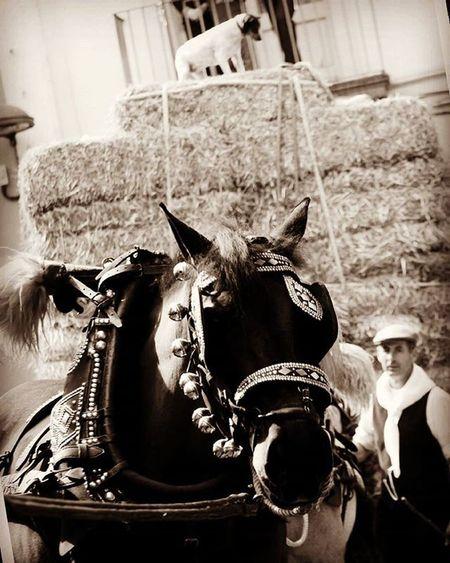 Trestombs Molinsderei Tracionscatalanes Catalunya Descobreixcatalunya Barcelona Caballs Horses Turismecatalunya Rural