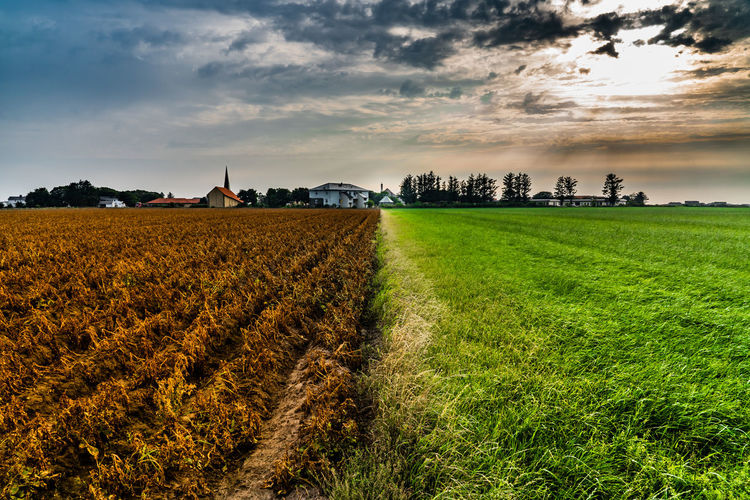The sunny side is and old meet in the middle. Agriculture Beauty In Nature Cloud - Sky Environment Field Grass Growth Land Landscape No People Outdoors Plant Scenics - Nature Sky Tree Two Sides