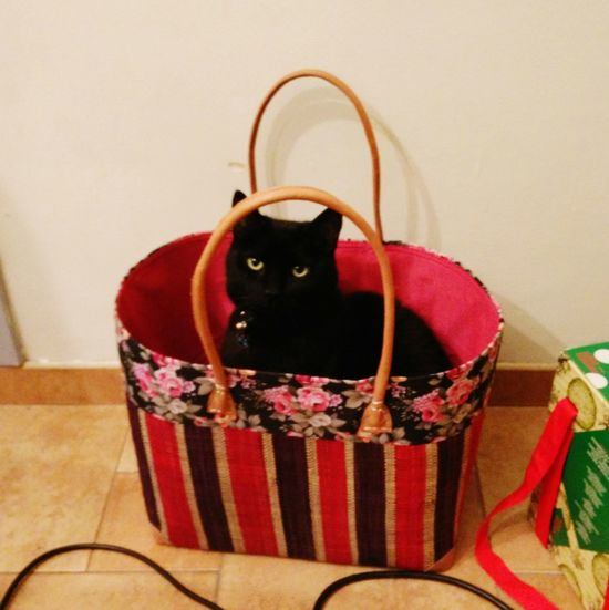 Tom wants to be in the picture too! Cat Shopping Basket Black Cat