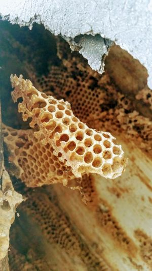 Honeycomb Nature Animals In The Wild No People Animal Themes Close-up Day Outdoors Beauty In Nature Hive Bees EeyEmnewhere Infrastructure EyeEmNewHere The Architect - 2017 EyeEm Awards EyeEm Nature Lover Pattern Textured  Honeycombs