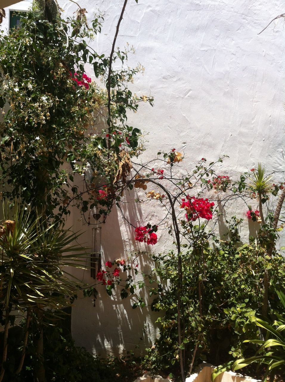 flower, growth, plant, tree, nature, fragility, no people, beauty in nature, day, outdoors, freshness, water, flower head, greenhouse