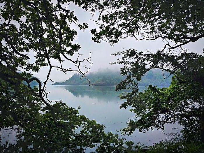 Reflection Water Lake Tree Nature Beauty In Nature Scenics Outdoors Sky Landscape Tranquility Silhouette No People Fog Dawn Branch Mobile Photography Idilic Scene Green Leaves West Cork Rineen Woods Ireland