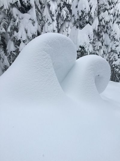 Snow Snails Snowy Trees Snowy Tree Skiing Snow Art
