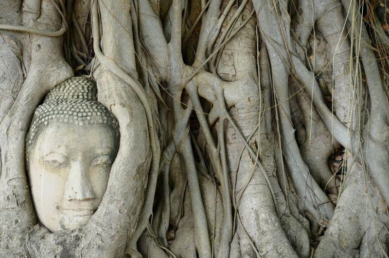 Close-Up Of Buddha Head Amidst Bodhi Tree Roots At Wat Mahathat