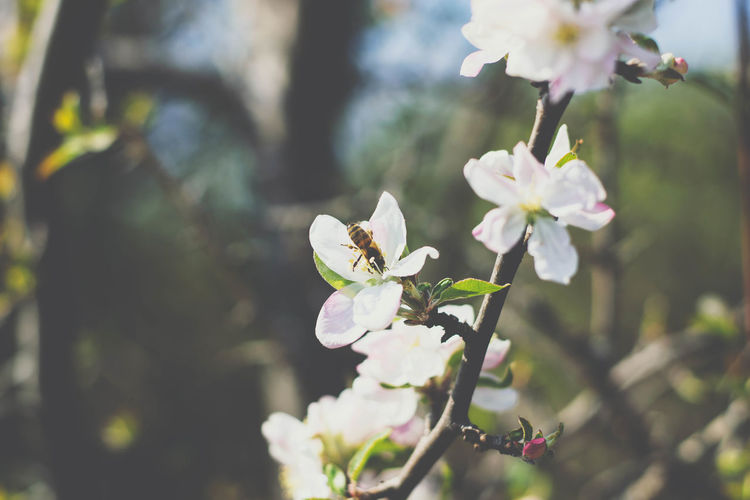Flowering Plant Flower Plant Fragility Freshness Growth Vulnerability  Beauty In Nature Petal Close-up Tree Blossom Flower Head Nature Day Focus On Foreground Branch No People Inflorescence White Color Springtime Outdoors Pollen Cherry Blossom Spring