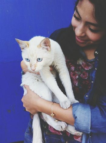 Yo y los gatosg. ;3 Gatitos Bebes *-* YOLO ✌