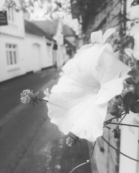 Such an idyllic place.. Check This Out Relaxing Taking Photos Enjoying Life Blackandwhite Streetphotography Streetphoto_bw Travel Travel Photography Travel Destinations Travelling Street Life Historical Building Historical Beautiful Day Beautiful Places Flowers
