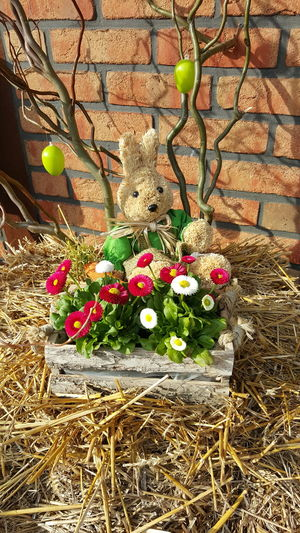 Easter Easter Bunny Osterhase Osterstrauch Decoration Deko Dekoration No Filter