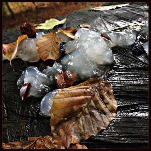 Champignons Mushrooms Autumn L'automne