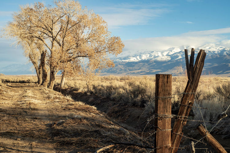 rustic wood fence post at entrance to a rural dirt road with winter tree in desert valley with snowy mountain range in distance California scenery Landscape Environment Land Sky Tranquil Scene Scenics - Nature Nature Tranquility Non-urban Scene Field Cloud - Sky Boundary Tree No People Day Fence Outdoors Wood Post Dirt Road Rural America Snowy Mountains Mountain Range Sierra Nevada Mountains Winter Trees