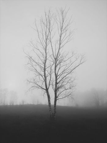 Fog Nature Beauty In Nature Branch Bare Tree Winter Silhouette No People Freshness Outdoors Tree Grass Scenics Day Sky Beauty In Nature Monochrome Black And White Friday Berch Tree Porn Tree The Great Outdoors - 2018 EyeEm Awards