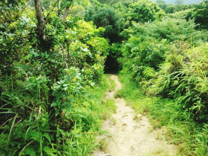 Hong Kong Hiking Scary Beautiful Nature