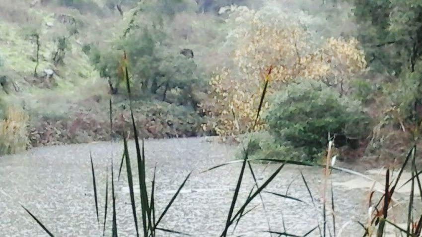 Enjoying The View Stormy Weather Nature Luver Pond Life From My Point Of View Daily_captures Goodbye2015 Awesome_shots