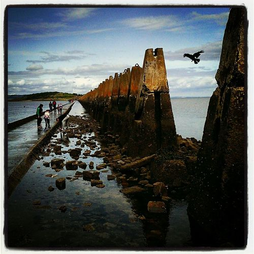 Cramond Island, Causeway 'tide Out' Crow
