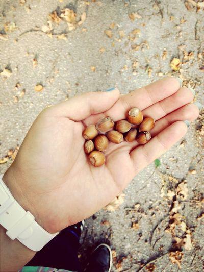 Nüsse? Welche Nüsse ???!?