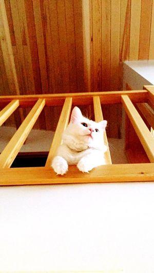 IGOT7🐥 Amateurphotography Pets Amateurphotographer  Lovelycats Domestic Cat