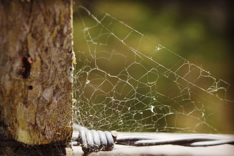 Spider Web Close-up Focus On Foreground Day Nature Outdoors No People Animal Themes Fragility Beauty In Nature The Great Outdoors - 2017 EyeEm Awards