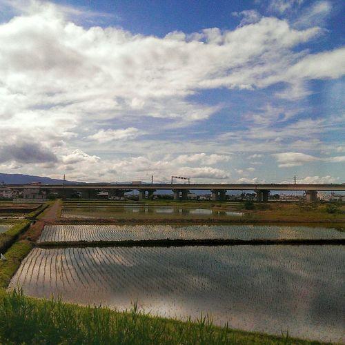 From the train ~ Japan Japan Photography JapanLife EyeEm Japan Rice Field Traveling Train Travel