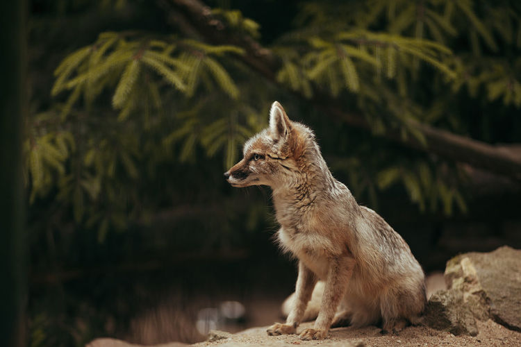 Fuchs Animal Animal Themes Animal Wildlife Animals In The Wild Day Focus On Foreground Fox Land Looking Looking Away Mammal Nature No People One Animal Outdoors Plant Sitting Standing Sunlight Tree Vertebrate Wolf