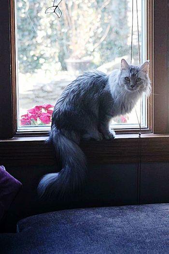 Beauty Catsofinstagram Catsofnyc