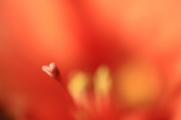 Abstract Assertive Backgrounds Beauty In Nature Defocused Detail Dreaming Extreme Close-up Fine Art Photography Fragility Fresh Growth Macro Orange Color Red Rêve Selective Focus Softness The Week On EyeEm Color Palette