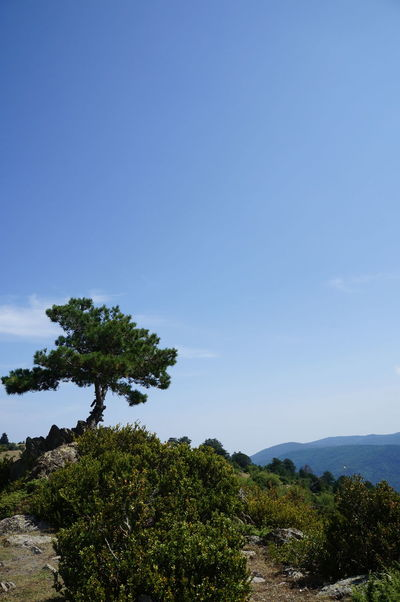 Greece Olympos Mountain Lonely Tree Stone Blue Sky