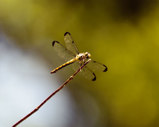 Dragon Full Length Insect Close-up Animal Themes Dragonfly Animal Wing Perching Animal Markings Twig