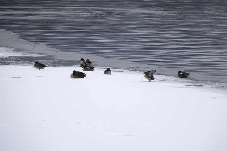 Birds swimming in lake during winter
