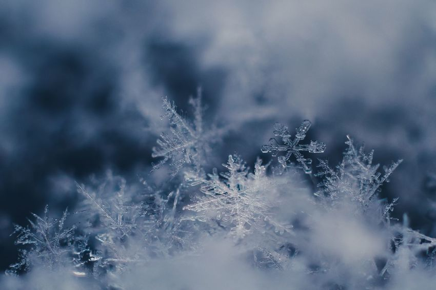 Maximum Closeness Winter Cold Temperature Snow Weather Nature Beauty In Nature Frost Frozen Snowflake Ice Crystal Ice Close-up Outdoors Macro Perspectives On Nature