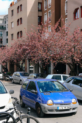 High angle view of cherry blossom on road in city