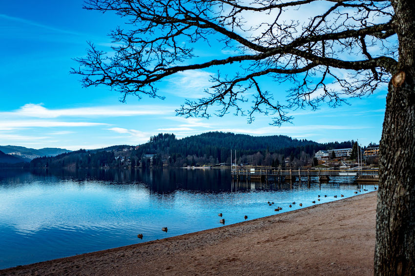 Titisee Baden-Württemberg  Badenwürttemberg Black Forest Blue Blue Sky Deutschland Germany Lake Lake View Schwarzwald Titisee Titiseeneustadt