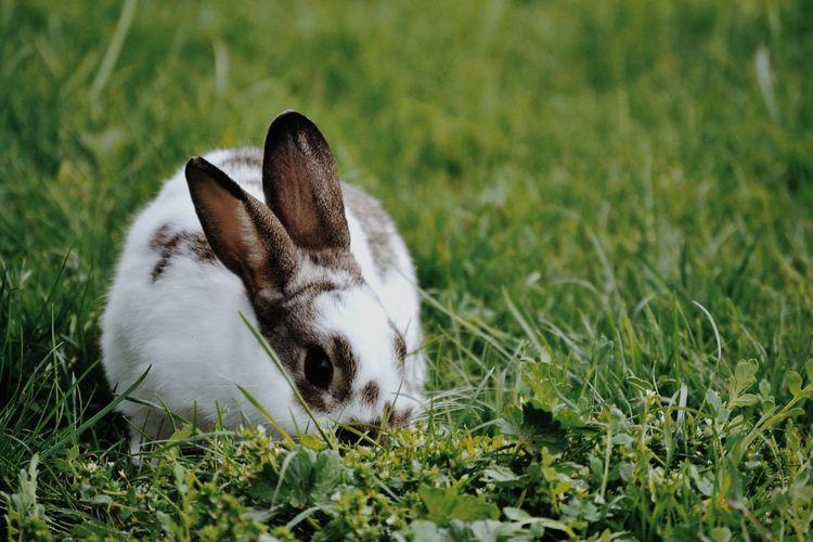 Close-up of rabbit sitting on field