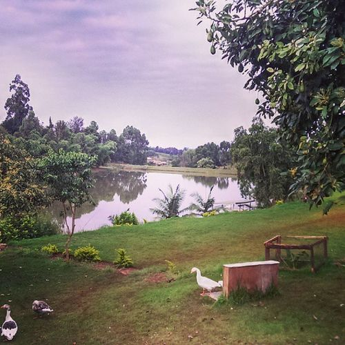Kenya Kiambu Webstagram Statigram pond lake sky cloudy instaclouds instacanvas beauty nature bbq relaxing view HTCOne @htc