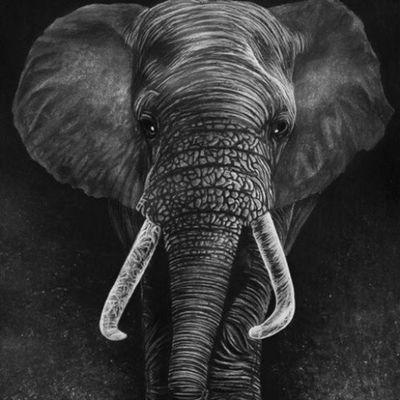 Elephant Las cosas perfectas que hizo Dios.