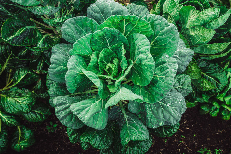 Full frame shot of vegetables growing on field in farm