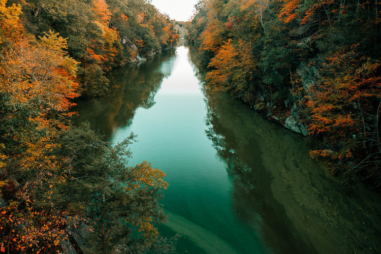 River amidst trees in forest during autumn