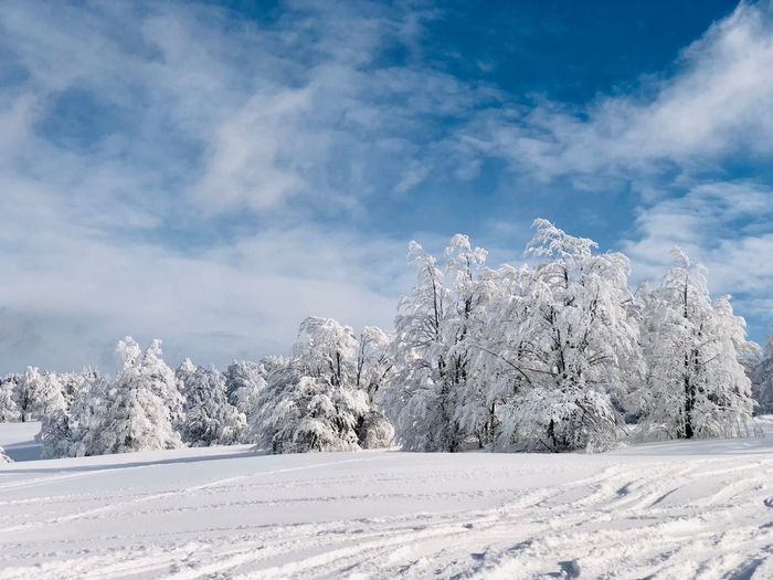 Forest covered in snow in winter on a day with blue sky Wild Branches Frozen Idyllic Mountain Range Mountain Blue Sky Sunny Outdoors Nature Day WoodLand Woods Forest Snow Winter Cold Temperature Tree Sky White Color Scenics - Nature Beauty In Nature Tranquil Scene Tranquility Landscape Non-urban Scene Environment Land No People Covering