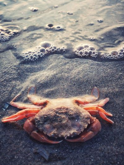 Detail Animal Themes Animal Photography Water_collection EyeEm Selects EyeEm Gallery EyeEm Nature Lover EyeEm Best Shots EyeEm Masterclass No People Focus On Foreground Sea Life Sea Beach Water Sand Shore Close-up Crab Claw Animal Shell