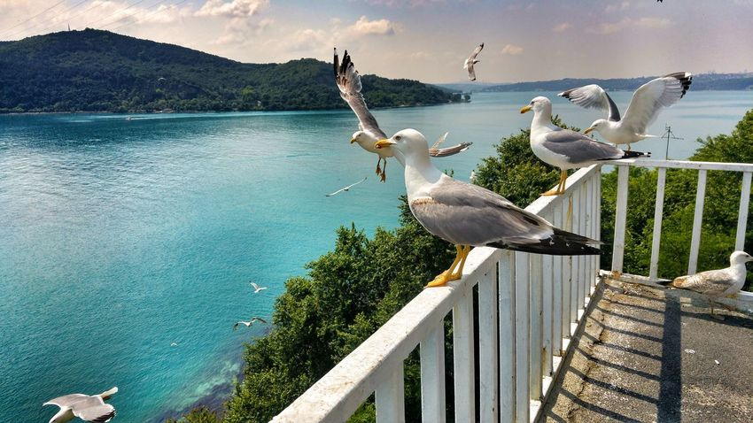 Bird Animals In The Wild Animal Themes Railing Animal Wildlife Day Water Outdoors Nature No People Beauty In Nature Sunlight Lake Perching Pelican Sky Beykoz From My Point Of View Sarıyer Be. Ready.