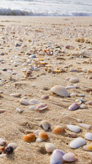 Surface level of shells on shore at beach