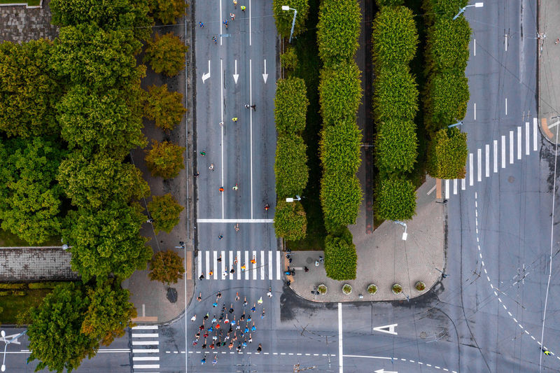 High angle view of plants by road in city