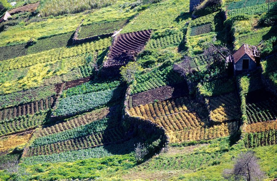 Nature Terraced Field Outdoors Day High Angle View Agriculture No People Landscape Travel Destinations Beauty In Nature