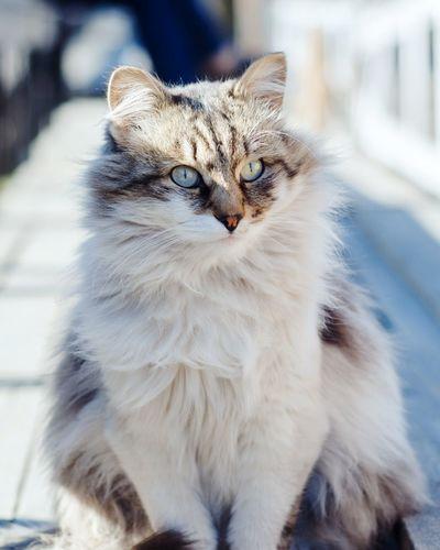 Homeless furry cat