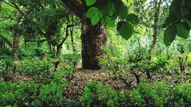 Dublin St. Stephens Green Verdant TreePorn EyeEm Nature Lover