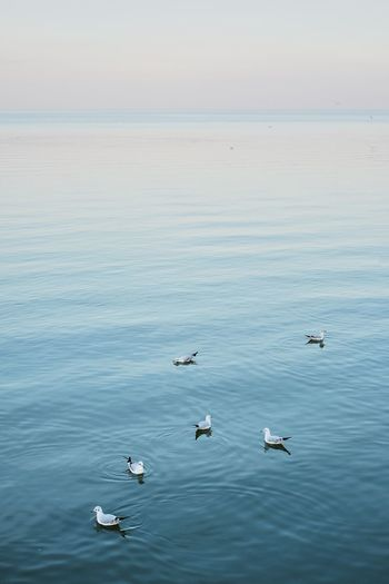 Water Bird Animals In The Wild Group Of Animals Vertebrate Animal Wildlife Animal Themes Animal Waterfront Beauty In Nature Swimming Nature Day Sea No People Swan Sky Large Group Of Animals Outdoors Floating On Water Flock Of Birds