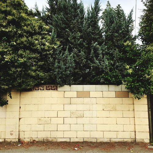 Plant Tree Architecture Built Structure Building Exterior No People Day Nature Growth Outdoors Wall - Building Feature Green Color Brick Wall Residential District Park - Man Made Space House Wall Building Brick Park